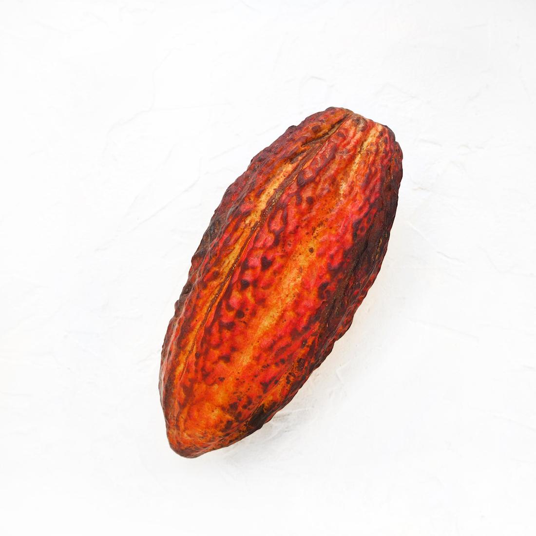 Свежий плод какао (1 шт., 700 г)